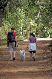 hikers with dog