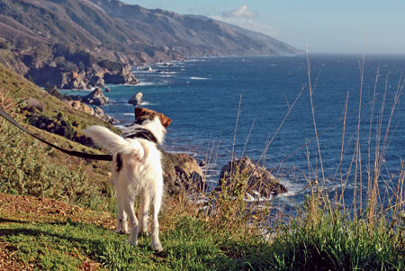 Big Sur is one of the gems of the California Coast. Even though you will be  hard- pressed to find indoor lodging with your dog or many pet-friendly ...