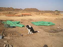 dog at archeology site