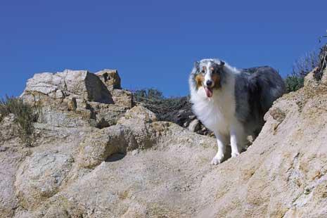 Coastal Canine Magazine: Rescue Me