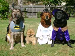 4 costumed dogs